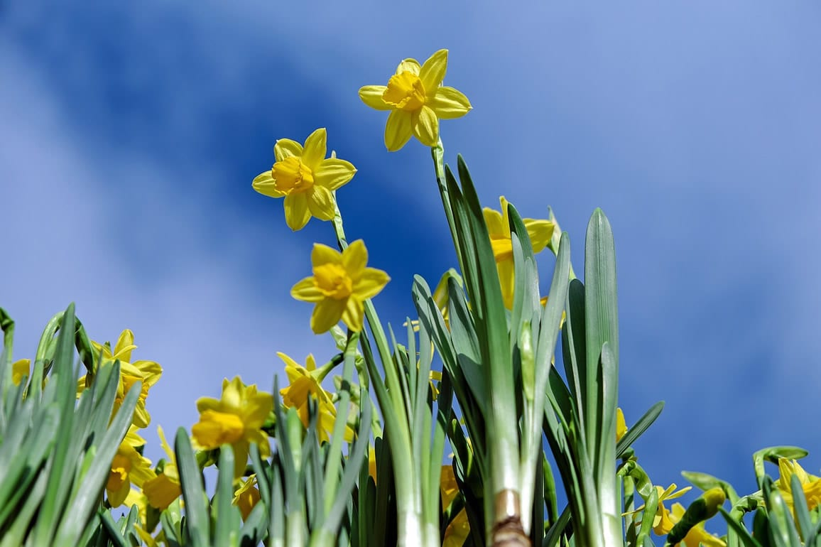 Inspiration for your spring garden