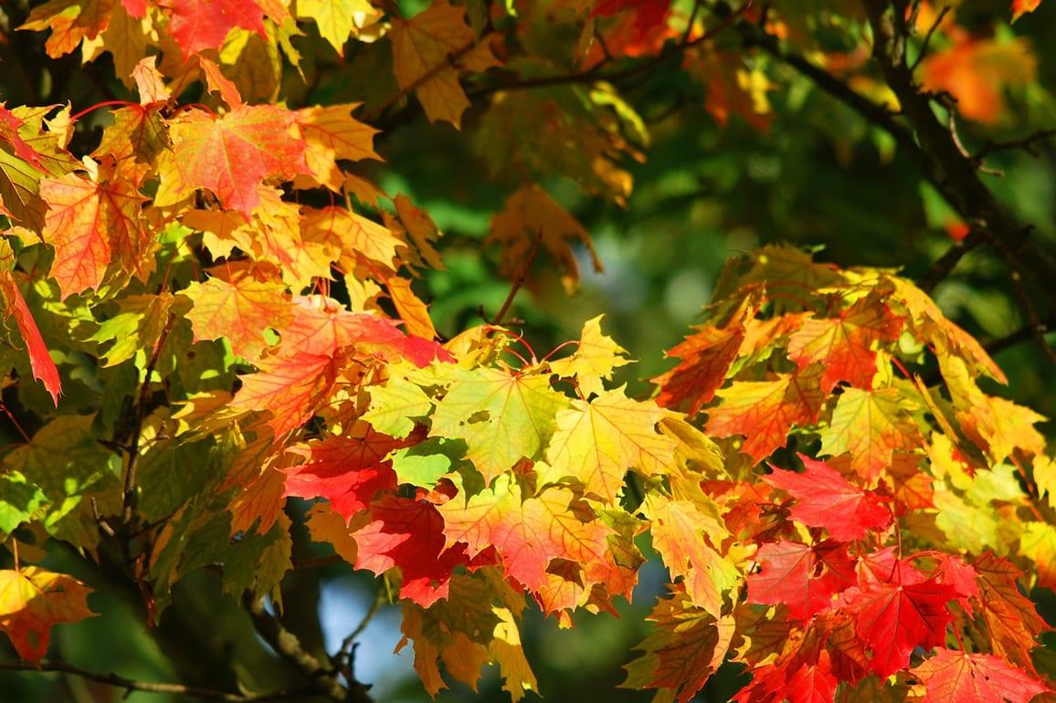 Inspiration for your autumn garden