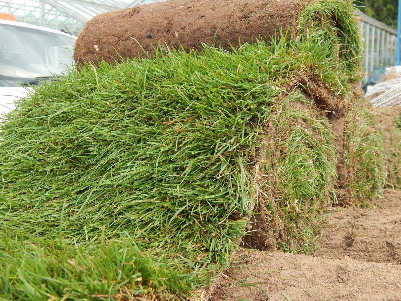 Singletons Premium Seeded Lawn Turf