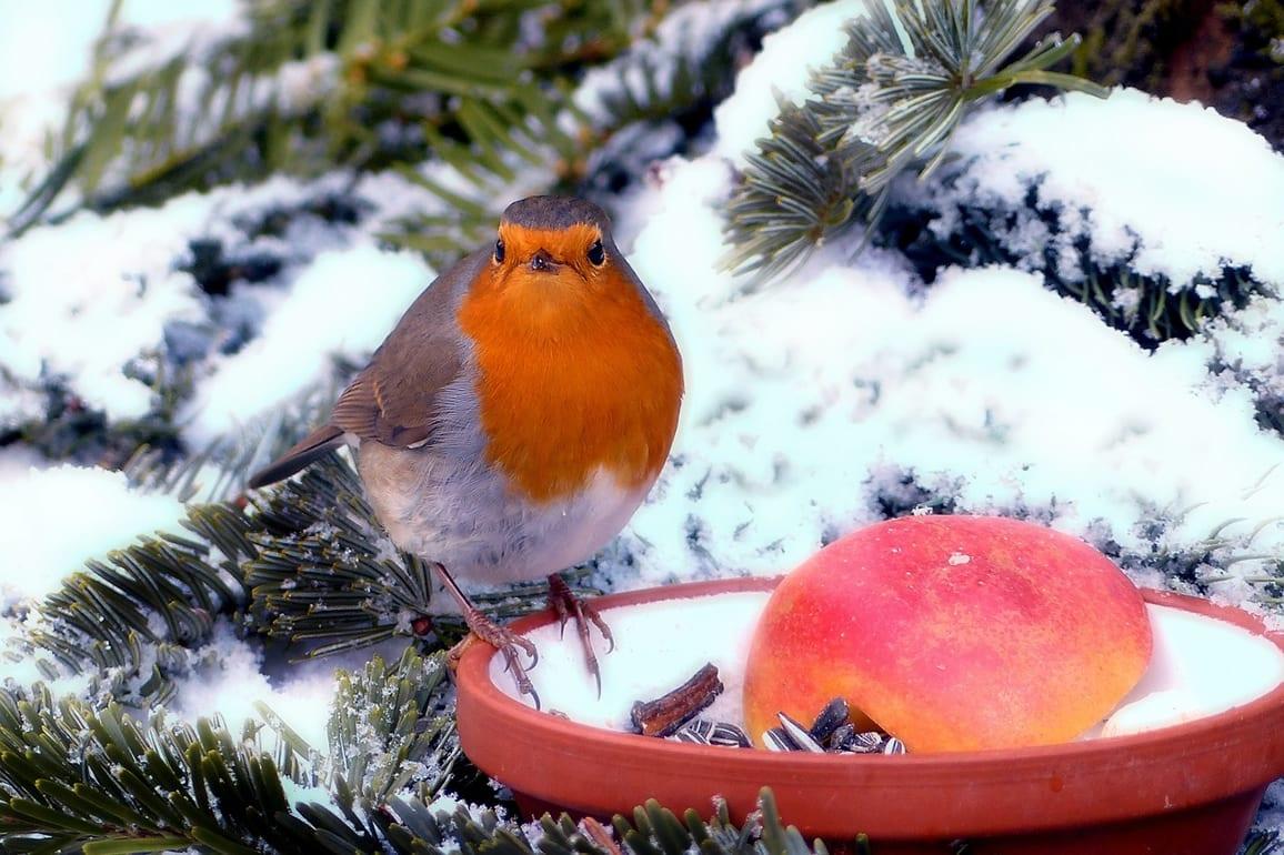 Inspiration for your winter garden