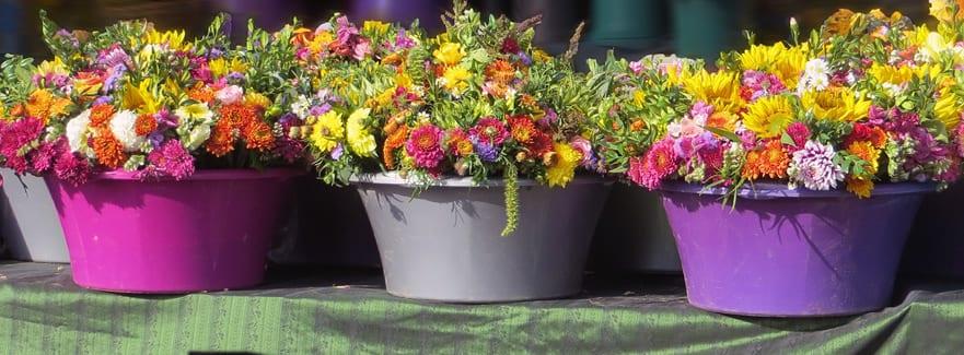 Tips for your July Garden from Singletons Nurseries, Bromsgrove