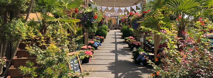 Singletons Nurseries is Re-Opening