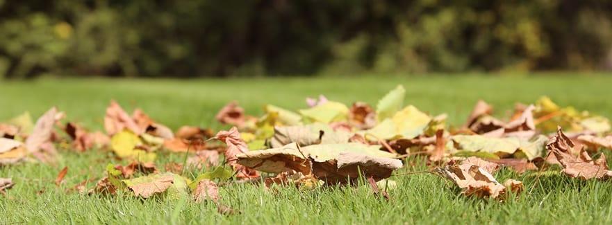 Tips for your September Garden