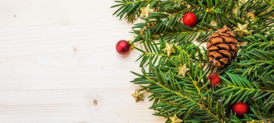 Top Tips for your December Garden