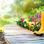 Top Tips for your April Gardens