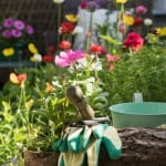 Sarah's Top Tips for your June Garden