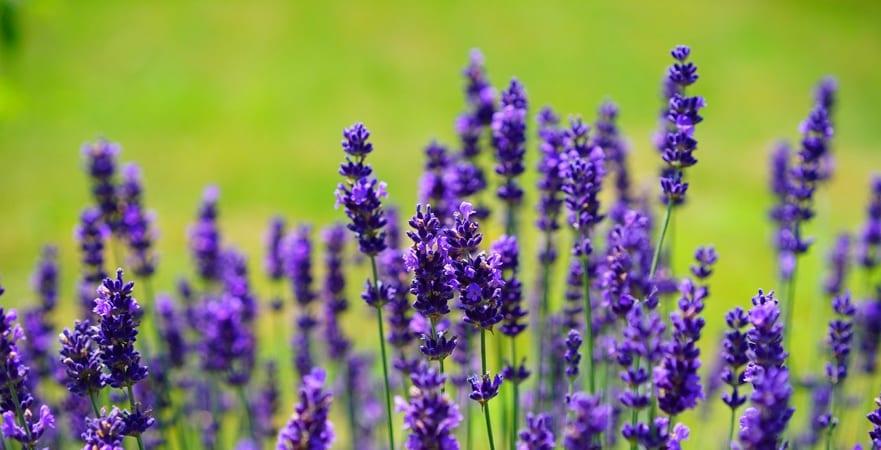 Top Tips for August Garden