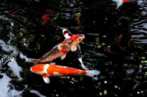 Pond Fill