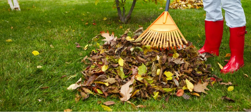 Erna's Top Tips for your November Garden