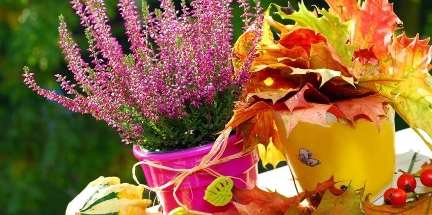 Sarah's Top Tips for your October Garden