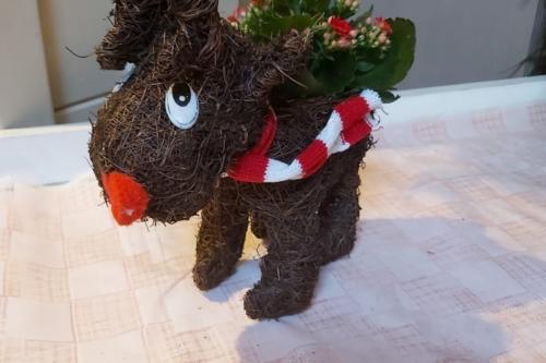 Cute Raffia Reindeer Kalanchoe