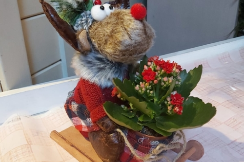 Cute Reindeer with a Potted Kalanchoe