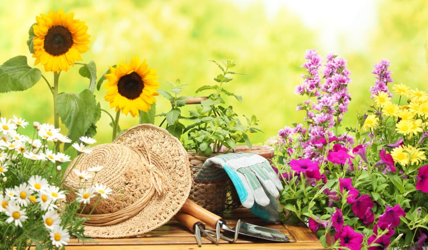 Andrews Top Tips for your July Garden