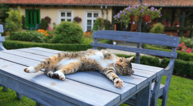 Top Tips for your September Gardens